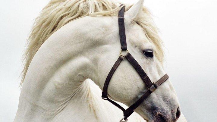 NO COMMENT! Un cal a fost adus pe ringul de dans al unui club de noapte. Ce a urmat (VIDEO)