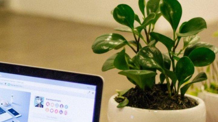 Sigur nu știai asta: De ce e bine să ai în sufragerie o plantă cu frunze rotunde