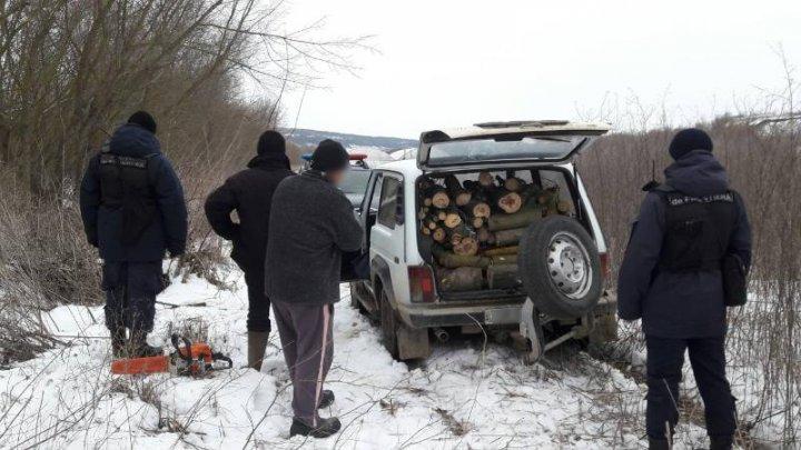 Doi bărbați, surprinși în timp ce defrișau ilegal copaci la frontieră. Persoanele nu și-au putut justifica fapta