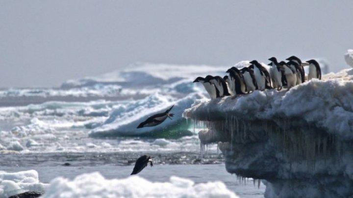 O super-colonie de peste un milion de pinguini, descoperită cu ajutorul imaginilor din satelit (FOTO)