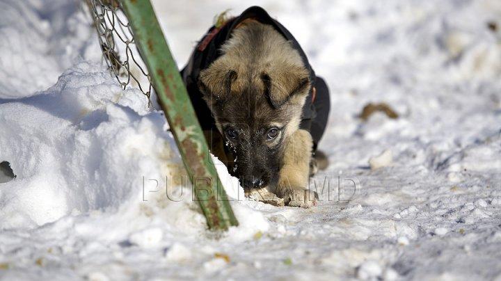 HAIOS! Un câine ne arată cum se face un om de zăpadă (VIDEO)