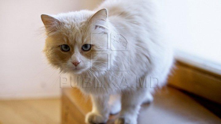 Curiozităţi care te vor face să îndrăgeşti şi mai mult pisicile
