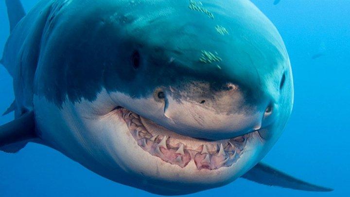 Un pescar a murit în mai puțin de un minut, după atacul unei rechin