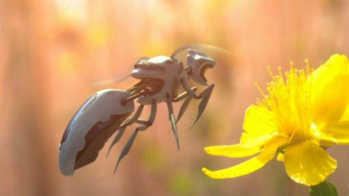 #realIT. Unul dintre cele mai mari lanţuri de retail ar putea dezvolta albine robot pentru polenizare