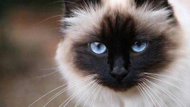 Descoperirea înfricoșătoare despre pisici. Ce fac când stăpănii nu sunt acasă