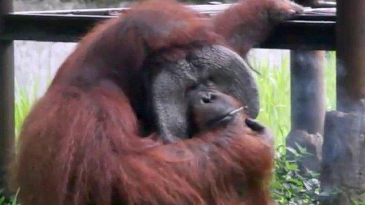 Gestul unui vizitator de la o grădină zoologică, condamnat dur de activiştii pentru drepturile animalelor. Ce a făcut acesta