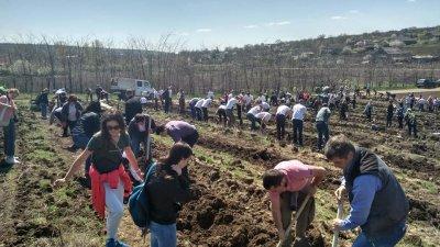 Salcâmi, paltini de câmp şi jugastru. Peste 400 de voluntari au sădit 50.000 de copaci la marginea satului Copceac