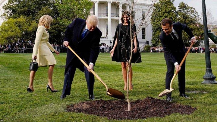 Ce s-a întâmplat cu stejarul plantat de Macron şi Trump, dispărut din grădina Casei Albe