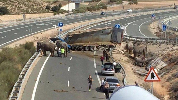 PUBLIKA WORLD: Un camion care transporta elefanţi s-a răsturnat în Spania. Un animal a murit, iar alții doi au fost răniți