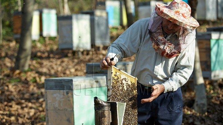 Uniunea Europeană interzice neonicotinoidele pentru a salva albinele