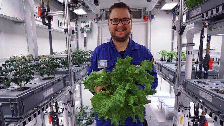 A fost strânsă prima recoltă de legume din Antarctica, crescute fără sol, fără lumină solară şi fără pesticide (VIDEO)