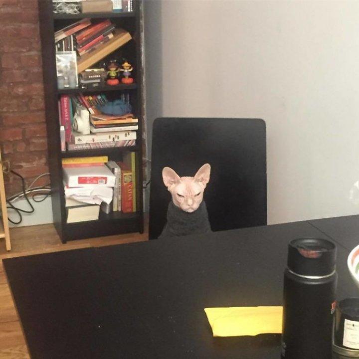 Așa arată cea mai supărată pisică din lume. O detronează pe Grumpy Cat (FOTO)