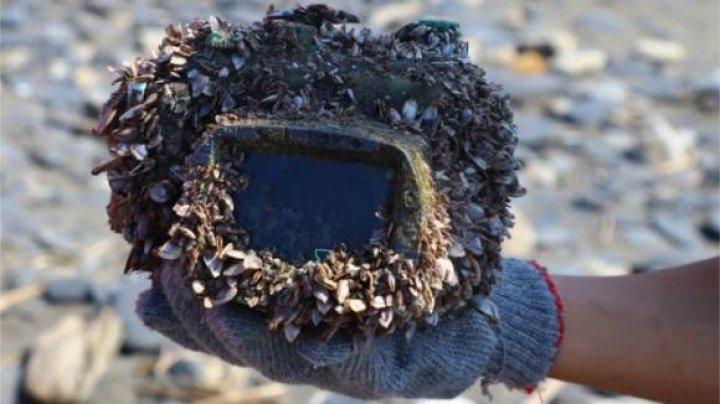 UIMITOR! Au găsit pe o plajă din Taiwan o cameră foto pierdută în 2015. Ce au descoperit când au deschis aparatul (FOTO)
