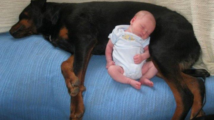 IMAGINI EMOŢIONANTE! Şi-au lăsat copilul singur cu câinii şi au încuiat uşa. Ce au găsit părinţii când s-au întors acasă