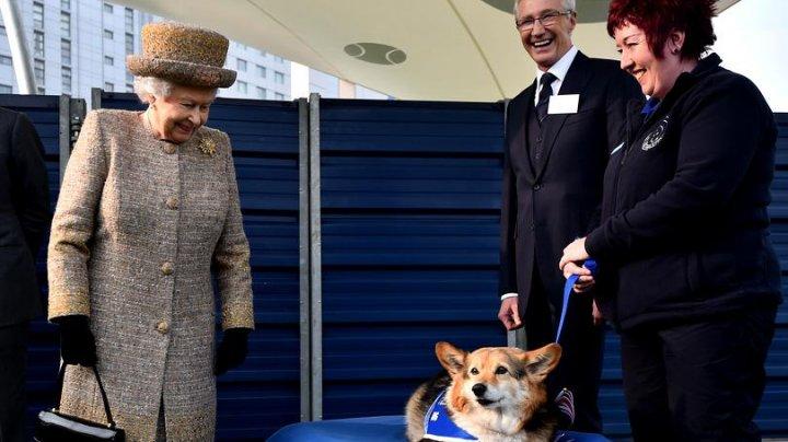 Regina Elisabeta a II-a a, suferă după moartea ultimului ei câine din rasa Corgi