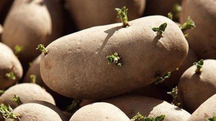 ESTE BINE SĂ ȘTII! Banalul cartof revine în topul legumelor minune
