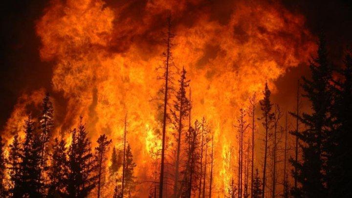 Incendiul uriaș din Australia ar fi fost provocat intenționat