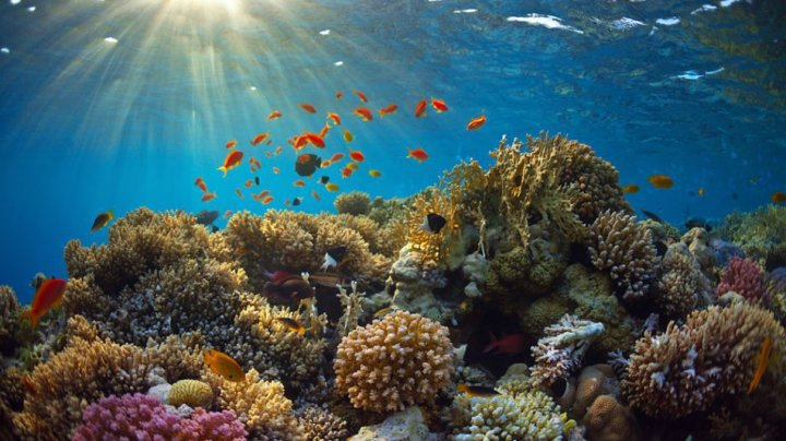 STUDIU: Marea Barieră de Corali a suferit cel mai grav episod de albire din istoria sa recentă