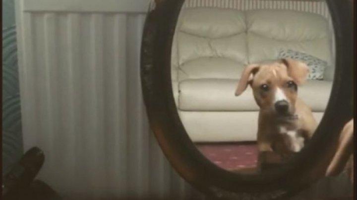 Reacție haioasă! Un cățel s-a văzut pentru prima dată în oglindă (VIDEO)