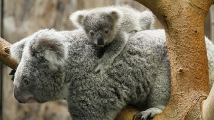 Studiu: Mai puţin de 30% dintre speciile de plante şi animale din Australia sunt studiate