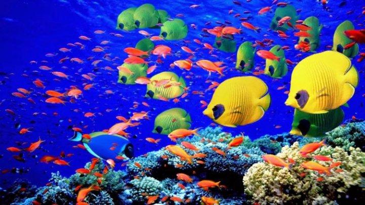 Oamenii de știință au găsit metoda neobișnuită, ignorată până acum, prin care pot salva Marea Barieră de Corali