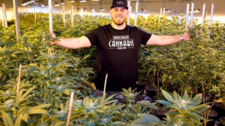 Nepotul lui Meghan Markle cultivă legal cannabis. Un nou drog va fi lansat cu ocazia nunții regale (FOTO)