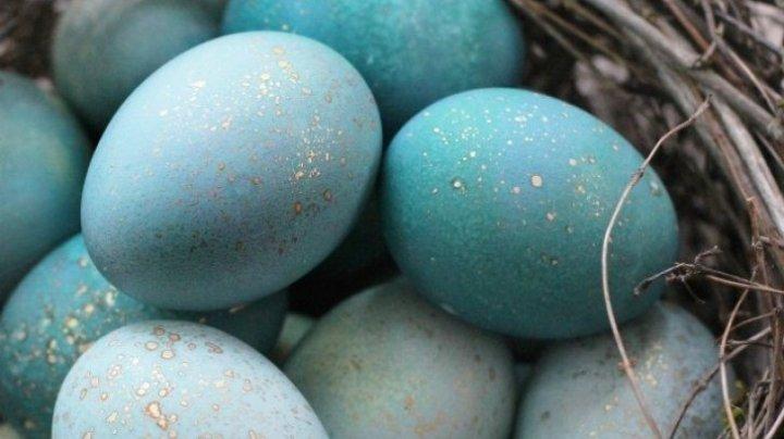 Sigur nu ştiai asta! Cum poți vopsi ouăle albastre fără vopsea artificială