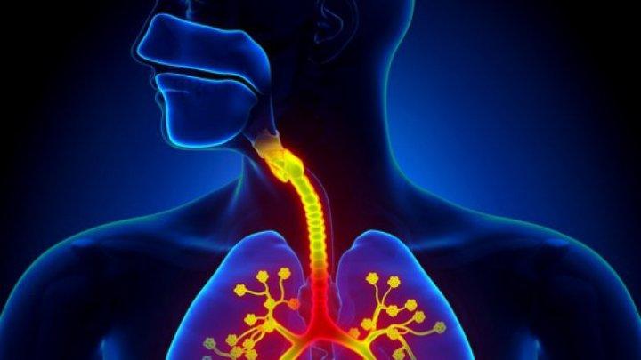 Amestecul natural din trei PLANTE care îţi curăţă plămânii. Şi tu le ai în casă