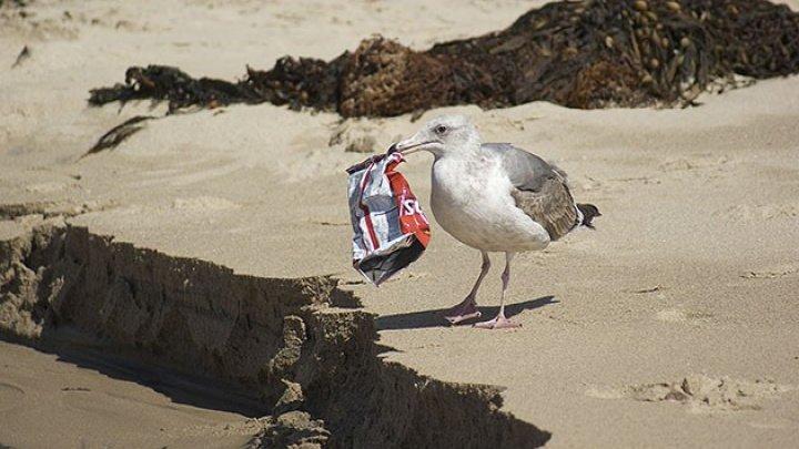 Studiu: Păsările marine evită turbinele eoliene din larg mai mult decât se credea anterior