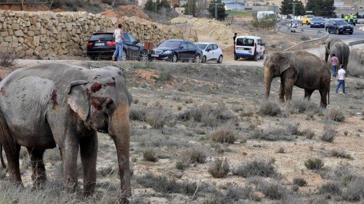INCREDIBIL. O femelă de elefant asiatic a murit la vârsta de 88 de ani