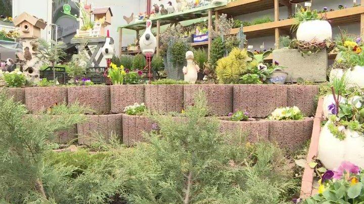 Moldovenii au luat cu asalt magazinele pentru amenajarea curţilor şi a grădinilor