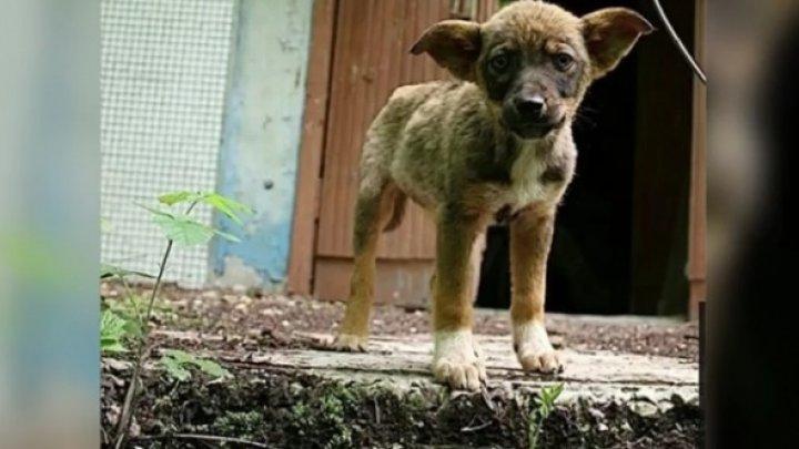 IMAGINI DINTR-O ALTĂ LUME! Cum arată câinii radioactivi de la Cernobîl, la 32 de ani de la dezastrul nuclear