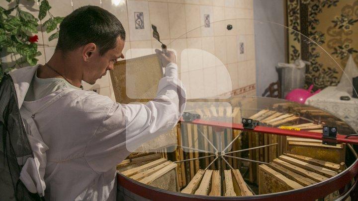 AFACERE DULCE PE GRANTURI. Povestea apicultorului care se bucură de prima miere din banii unui concurs organizat de AOAM (FOTOREPORT)