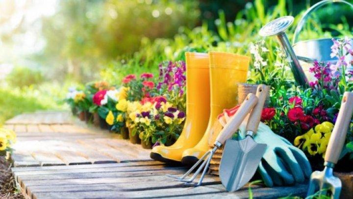 Substanţe naturale care elimină buruienile fără a ataca florile