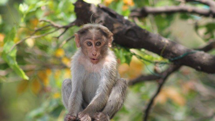 Un sat a fost invadat de maimuțe. Localnicii sunt disperați. Două persoane, atacate în plină stradă (FOTO)