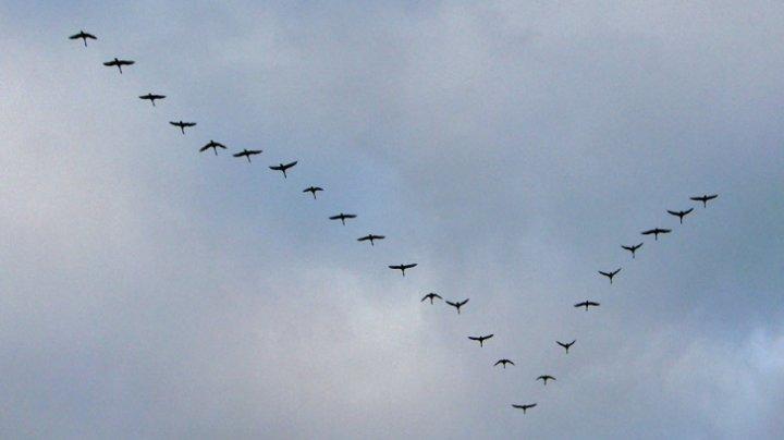 Aproape 20% din speciile de păsări din Europa sunt ameninţate cu dispariţia