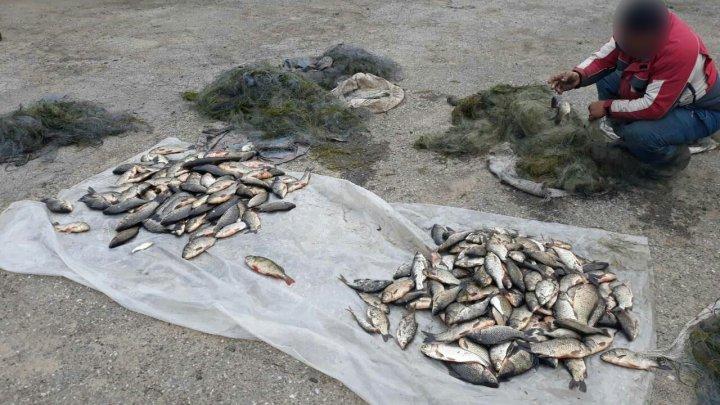 Doi moldoveni, prinşi în flagrant cu 45 kg de pește și mai multe plase (FOTO)