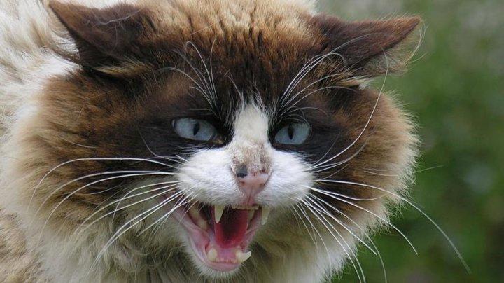 Un copil din Rezina a fost muşcat de o pisică turbată. ANSA a declarat carantină pentru două luni