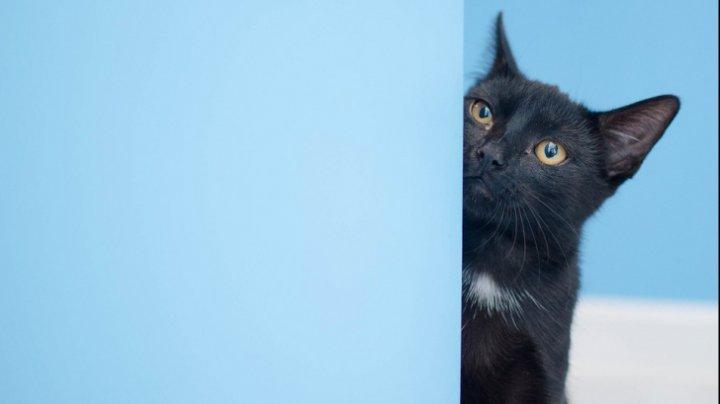 Tu nu ştiai asta! De ce privesc îndelung pisicile la un perete gol