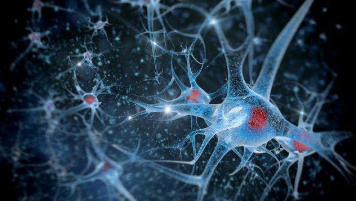 Noi tipuri de neuroni, găsiţi cu ajutorul a sute de mii de gameri