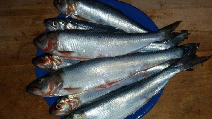 Trebuie să știi asta! Peştele miraculos care îţi curăţă vasele de sânge de colesterol