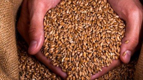 Coreea de Sud a oprit importurile de grâu şi făină din Canada după descoperirea unor seminţe de grâu modificate genetic