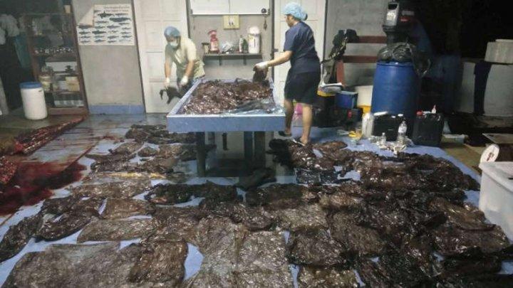 GROAZNIC! O balenă eşuată a murit pe o plajă din Thailanda, cu peste opt kilograme de plastic în stomac