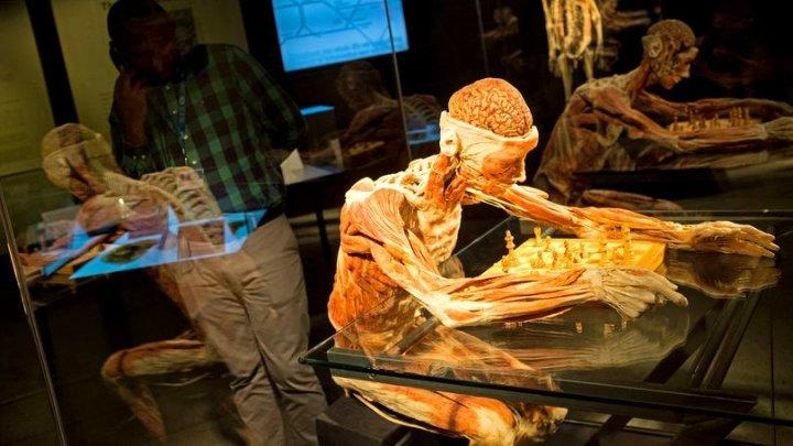Furt bizar dintr-o expoziție din Noua Zeelandă. Ce încerca să sustragă un bărbat