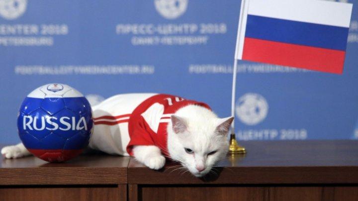Cupa Mondială 2018: Motanul Ahile mizează din nou pe Rusia, la meciul împotriva Egiptului