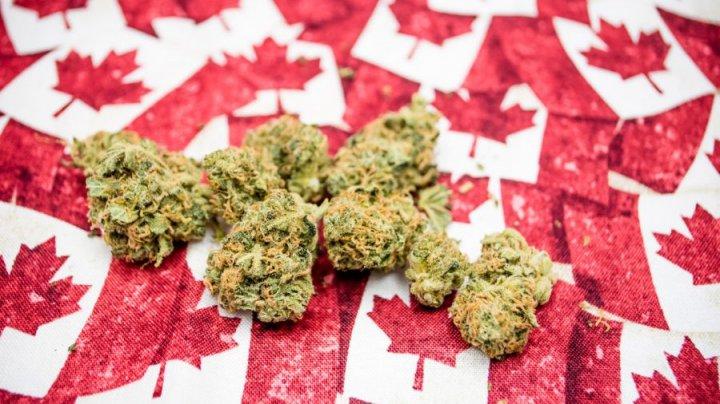 Rusia condamnă decizia Canadei de a legaliza fumatul recreațional de marijuana