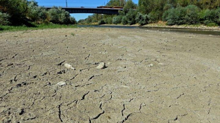 Stare de calamitate agricolă la scală naţională în Letonia din cauza secetei