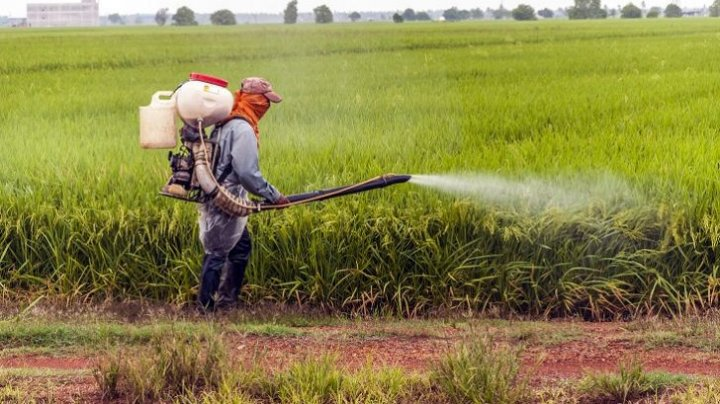 Peste 200 de agricultori din Azerbaidjan s-au intoxicat cu pesticidele folosite în câmpurile de bumbac