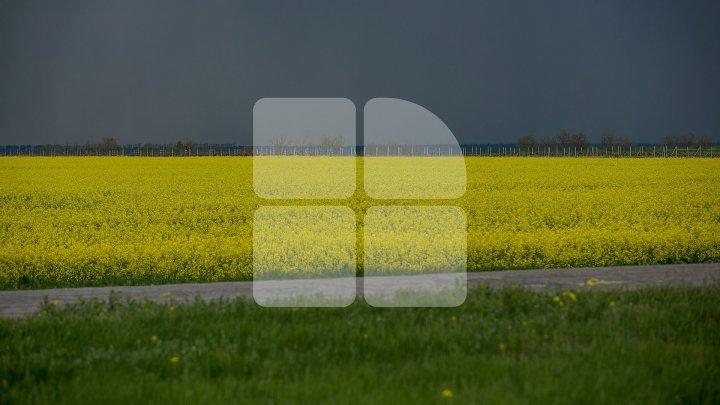 VOM AVEA DIN NOUĂ FURTUNĂ? Cod Portocaliu și Cod Galben de ploi torențiale în apropiere de Moldova