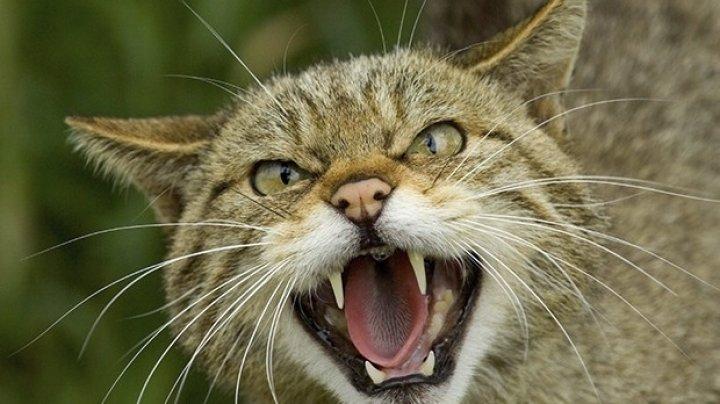 Raport: Pisicile din Australia ucid anual 650 de milioane de reptile anual